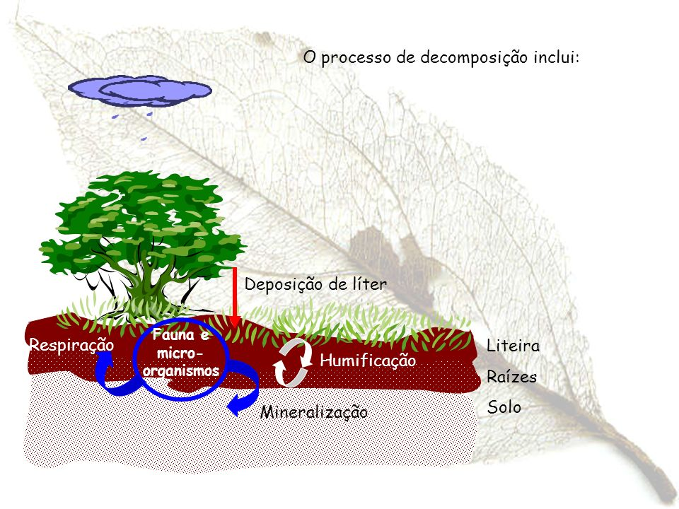 Fauna e micro-organismos