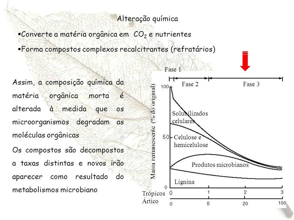 Converte a matéria orgânica em CO2 e nutrientes