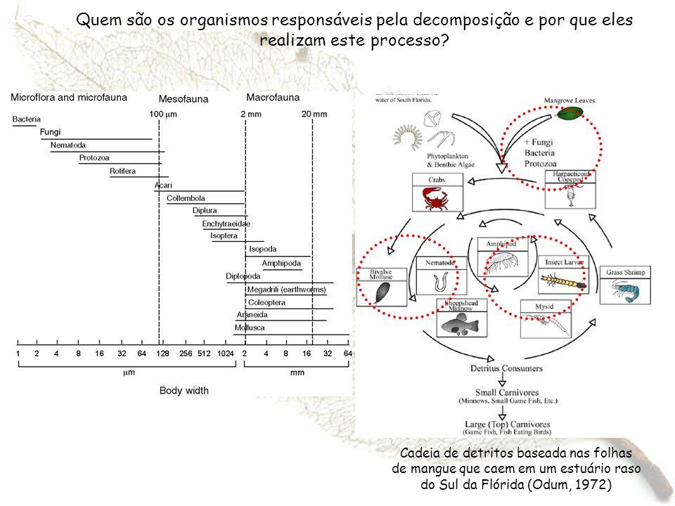 Quem são os organismos responsáveis pela decomposição e por que eles realizam este processo