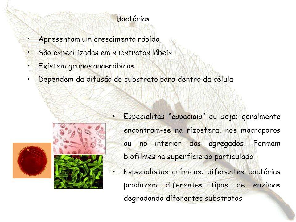 Bactérias Apresentam um crescimento rápido. São especilizadas em substratos lábeis. Existem grupos anaeróbicos.