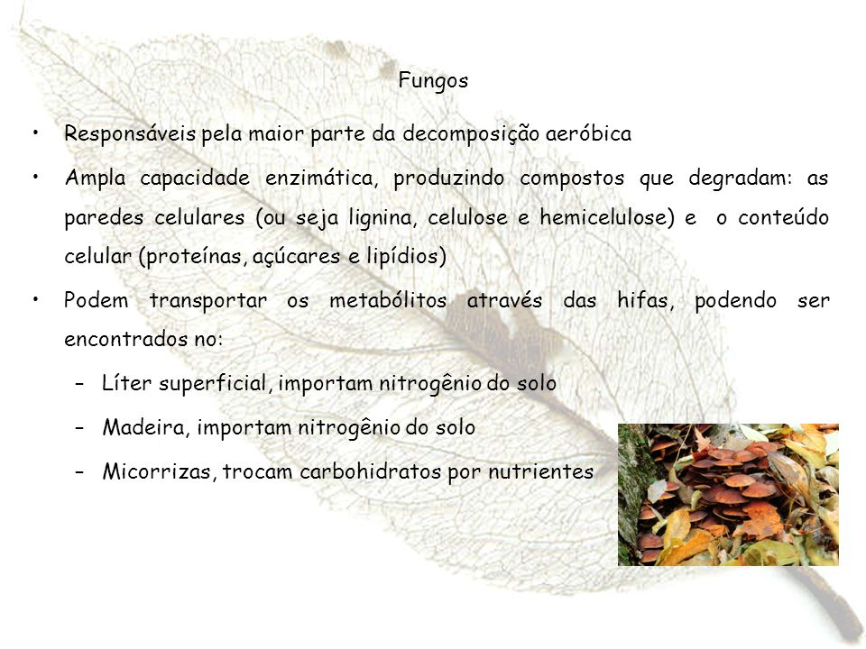Fungos Responsáveis pela maior parte da decomposição aeróbica.