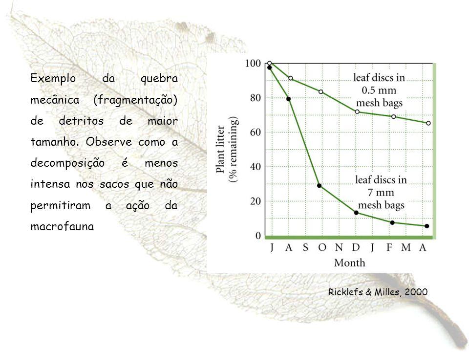 Exemplo da quebra mecânica (fragmentação) de detritos de maior tamanho