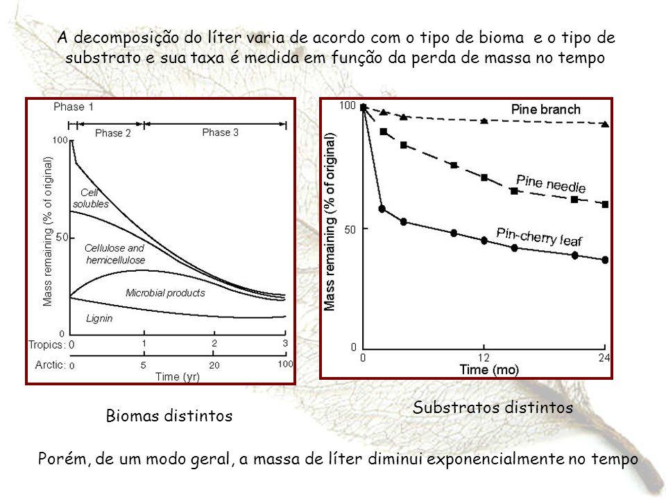 A decomposição do líter varia de acordo com o tipo de bioma e o tipo de substrato e sua taxa é medida em função da perda de massa no tempo