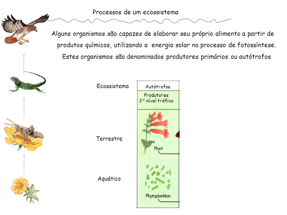 Processos de um ecossistema