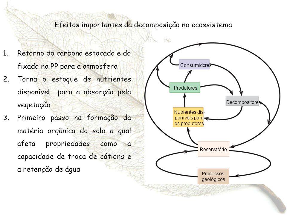 Efeitos importantes da decomposição no ecossistema