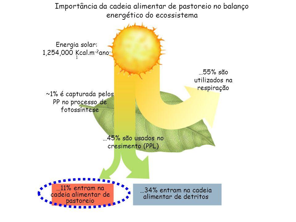 CNE0148 - Ecologia de Ecossistemas