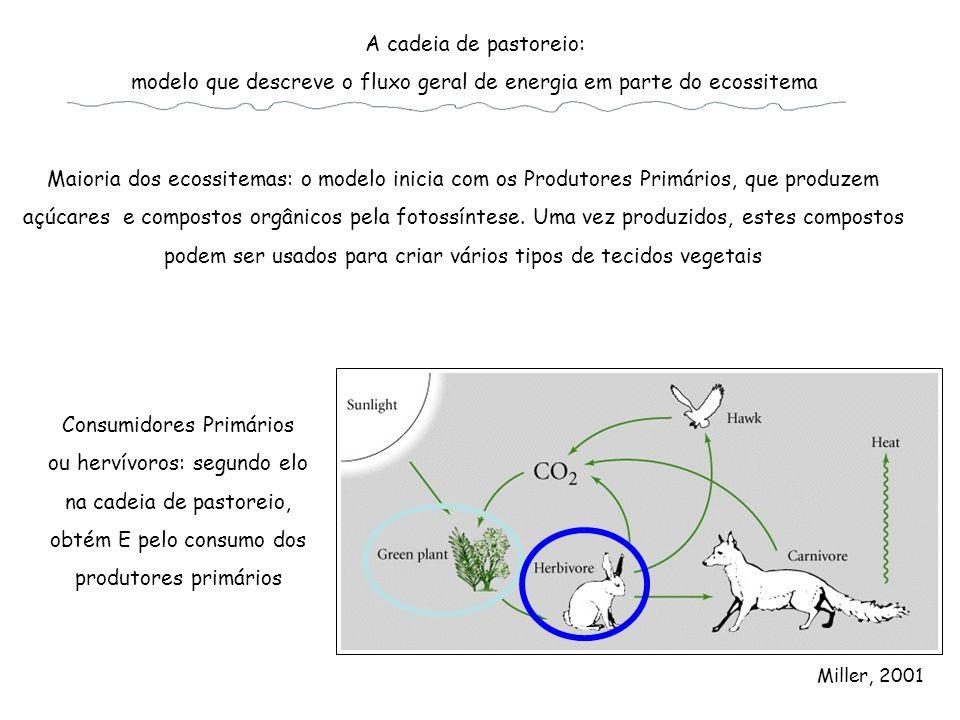 modelo que descreve o fluxo geral de energia em parte do ecossitema