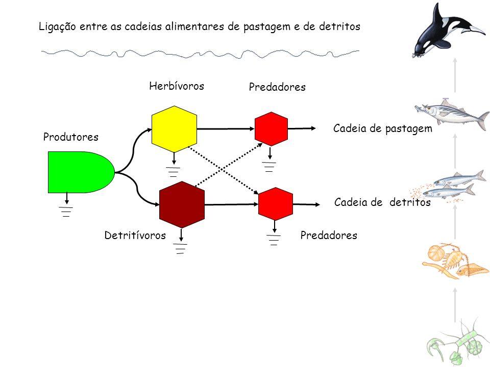 Ligação entre as cadeias alimentares de pastagem e de detritos