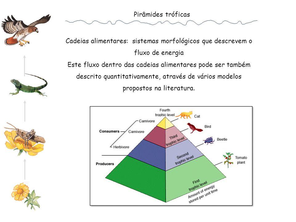 Pirâmides tróficas Cadeias alimentares: sistemas morfológicos que descrevem o fluxo de energia.