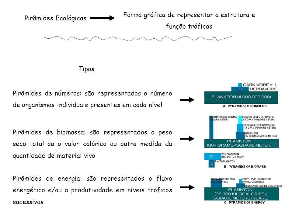 Forma gráfica de representar a estrutura e função tróficas