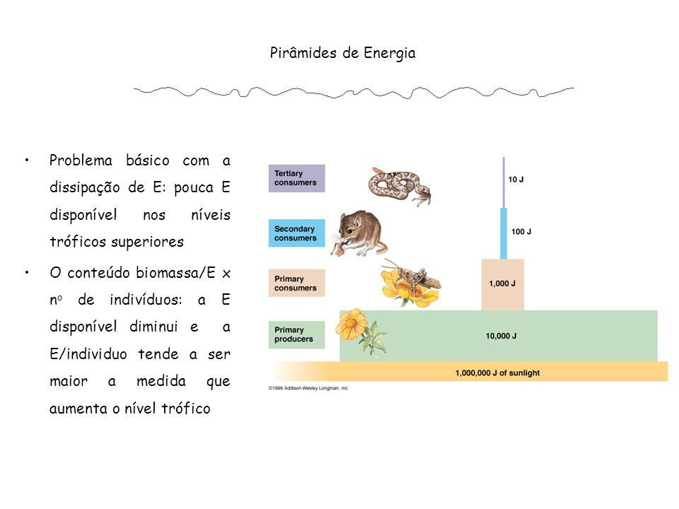 Pirâmides de Energia Problema básico com a dissipação de E: pouca E disponível nos níveis tróficos superiores.