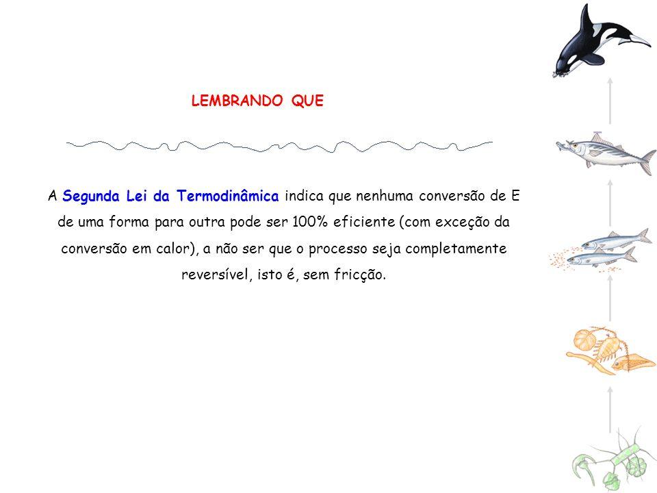 LEMBRANDO QUE