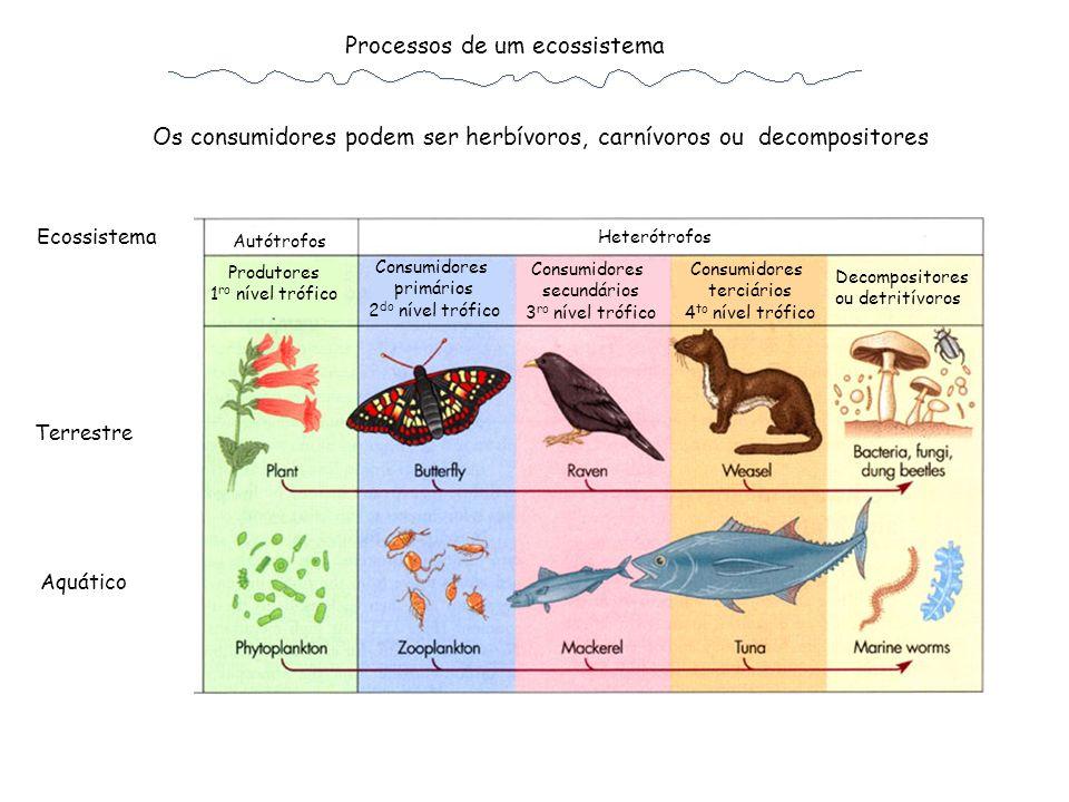 Os consumidores podem ser herbívoros, carnívoros ou decompositores