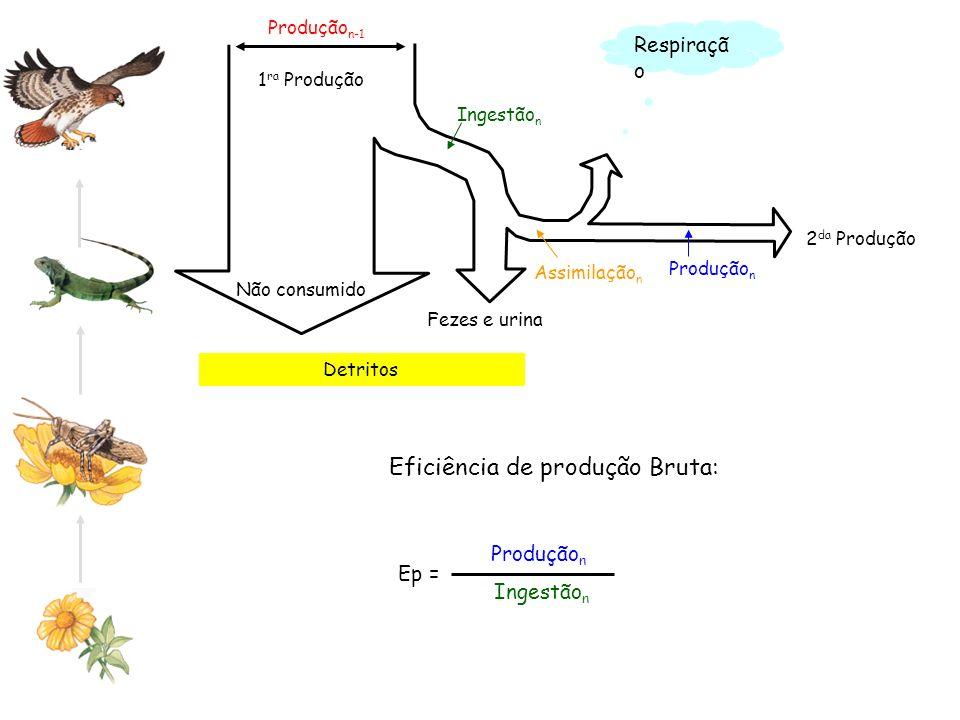 Eficiência de produção Bruta: