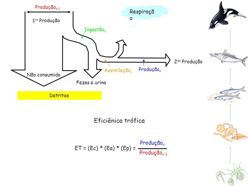 Eficiênica trófica Respiração Produçãon Produçãon-1