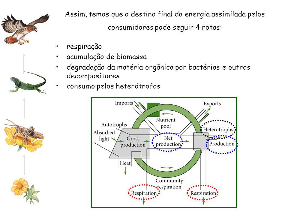 Assim, temos que o destino final da energia assimilada pelos consumidores pode seguir 4 rotas: