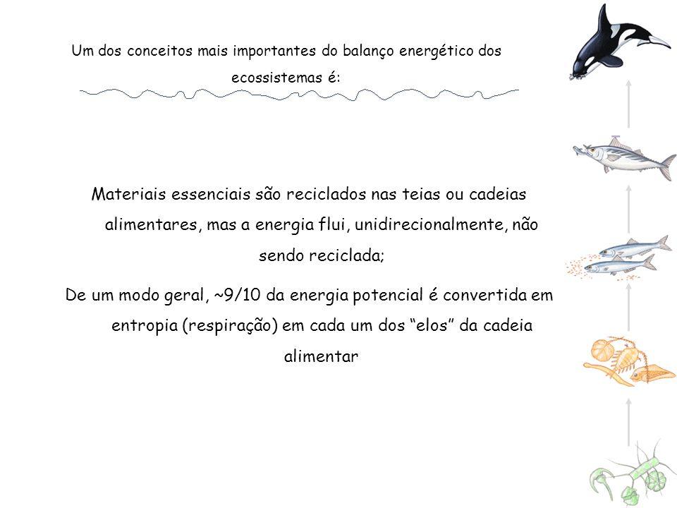 Um dos conceitos mais importantes do balanço energético dos ecossistemas é: