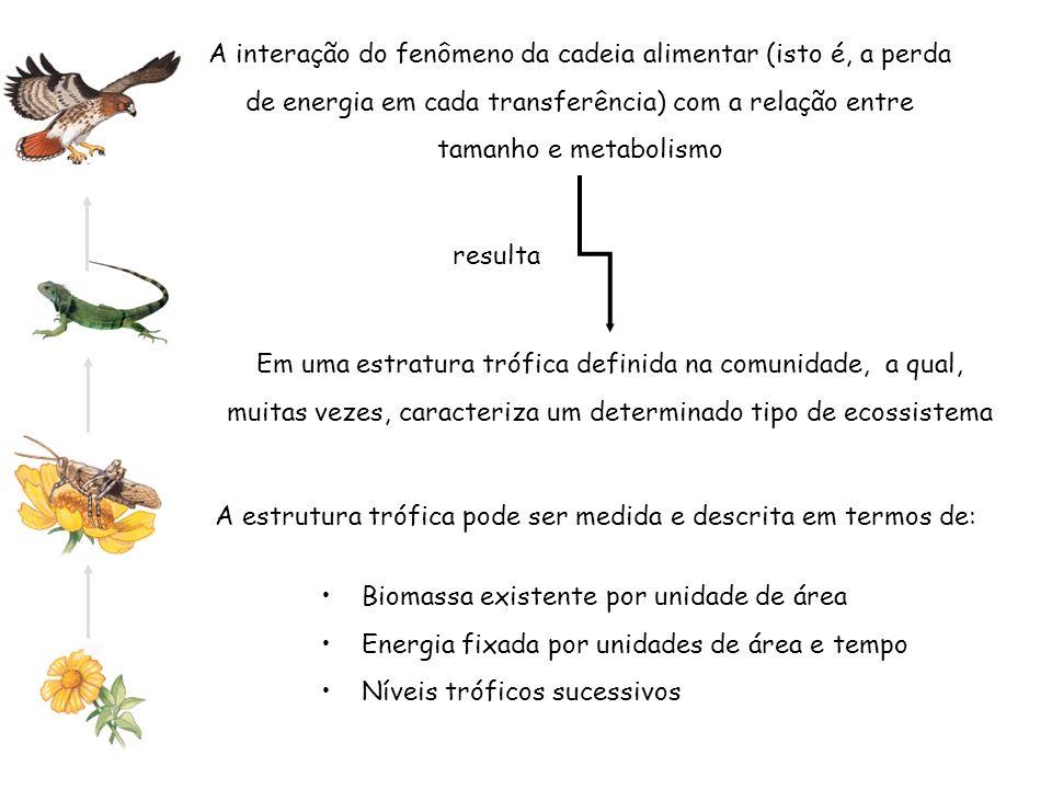 A estrutura trófica pode ser medida e descrita em termos de: