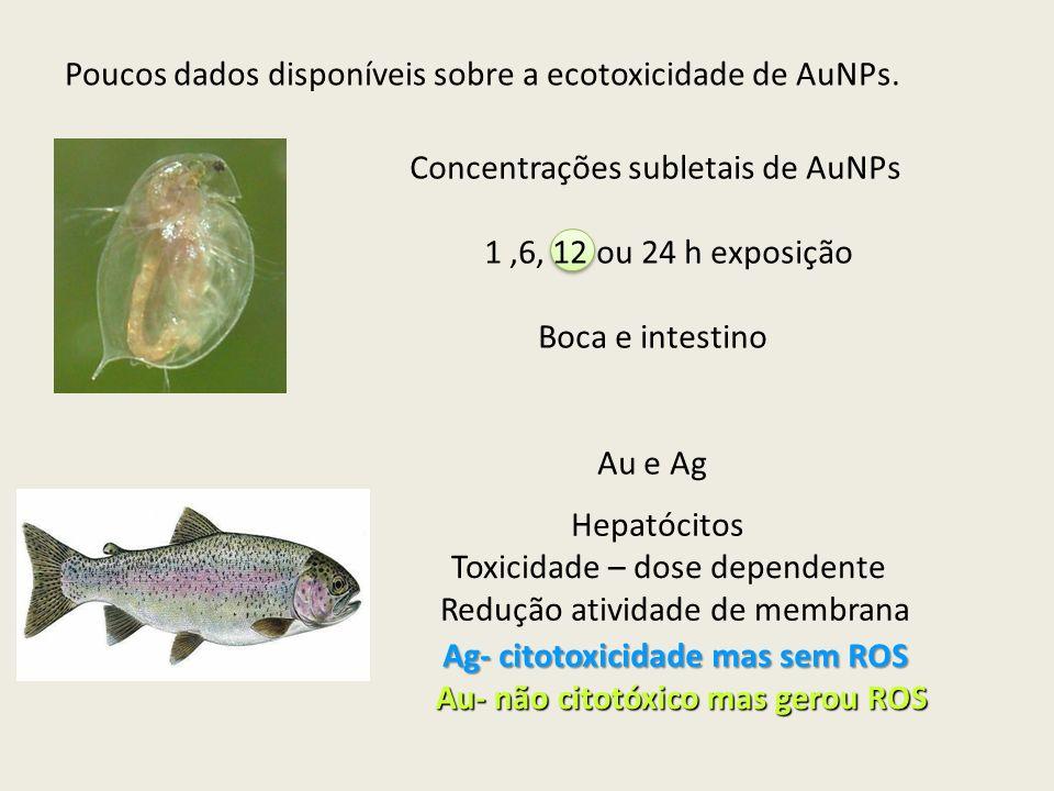 Ag- citotoxicidade mas sem ROS Au- não citotóxico mas gerou ROS