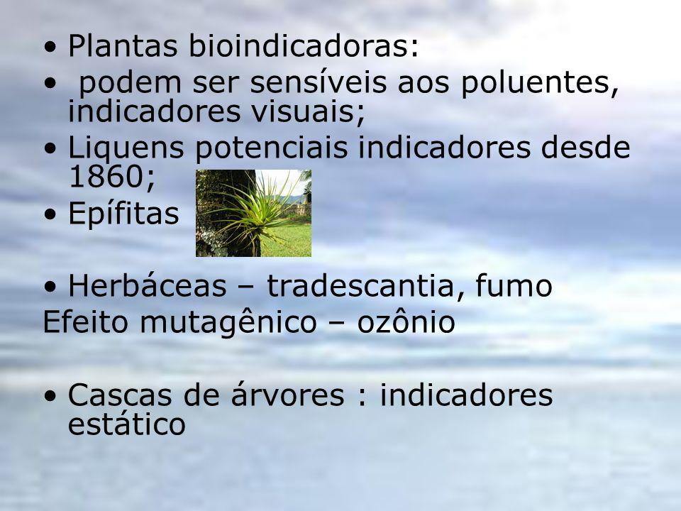 Plantas bioindicadoras: