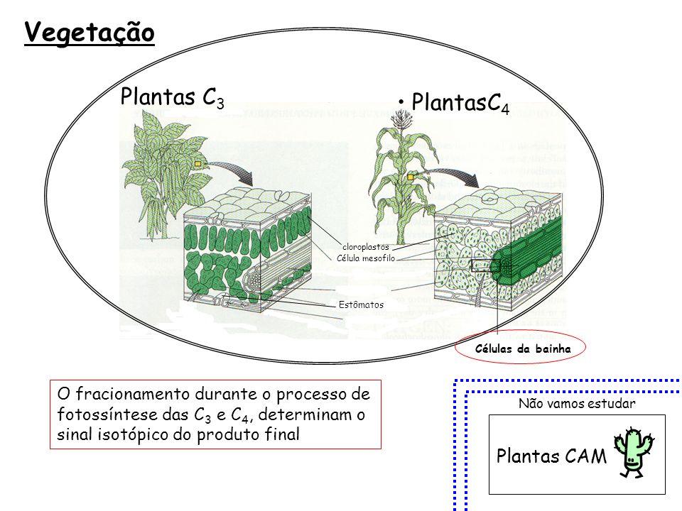 Vegetação Plantas C3 PlantasC4 Plantas CAM
