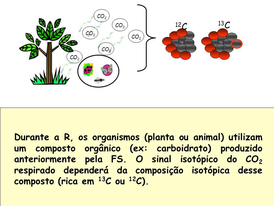 Durante a R, os organismos (planta ou animal) utilizam um composto orgânico (ex: carboidrato) produzido anteriormente pela FS. O sinal isotópico do CO2 respirado dependerá da composição isotópica desse composto (rica em 13C ou 12C).