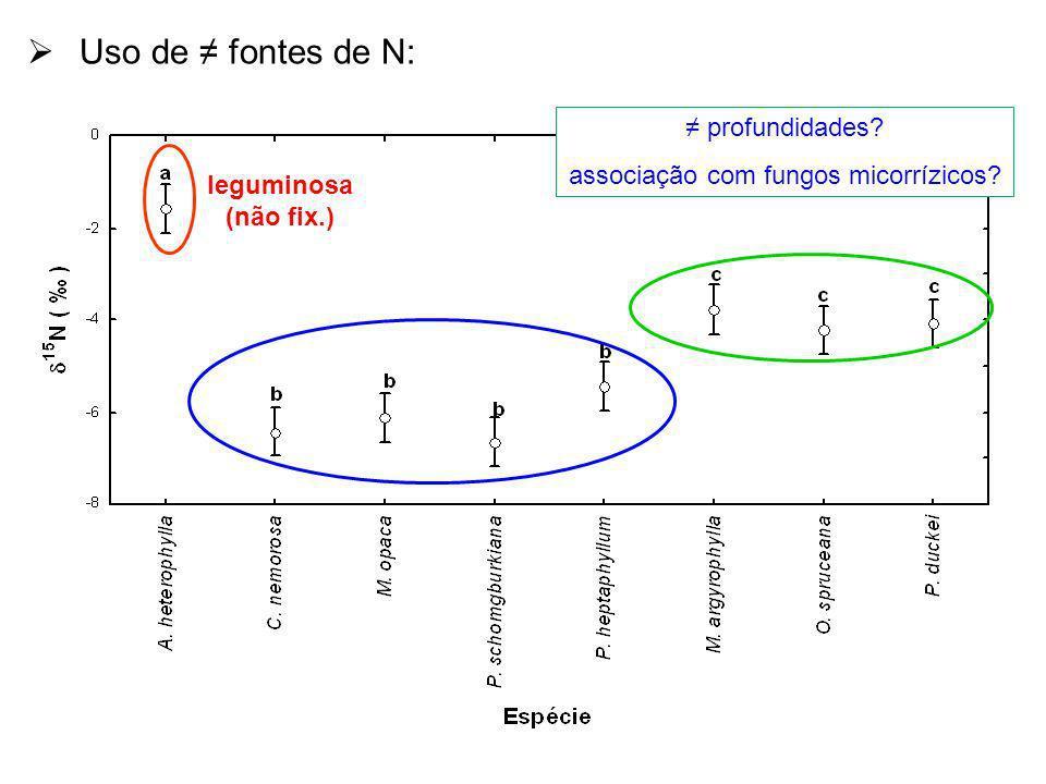 associação com fungos micorrízicos