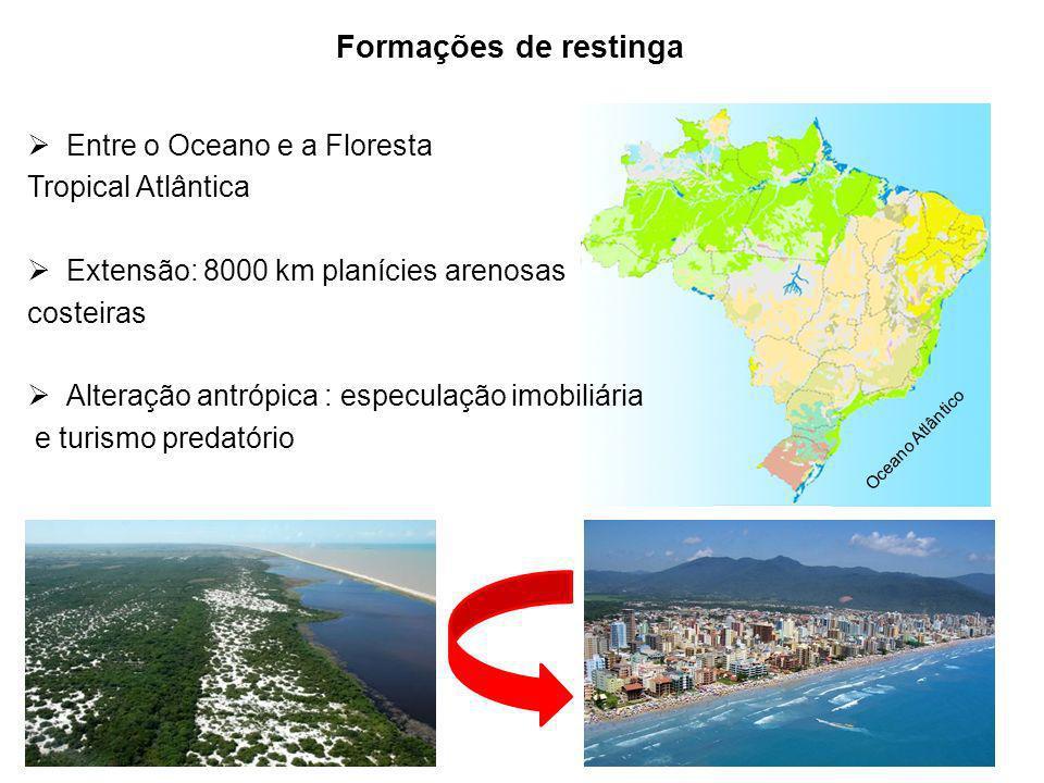 Apoio: Apoio: Formações de restinga Entre o Oceano e a Floresta