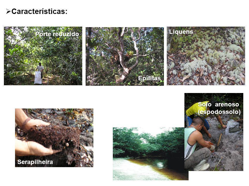 Características: Liquens Porte reduzido Epífitas Solo arenoso