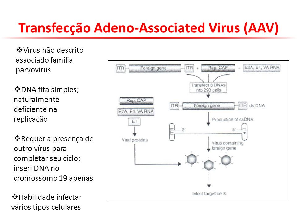 Transfecção Adeno-Associated Virus (AAV)
