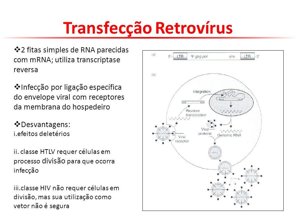 Transfecção Retrovírus