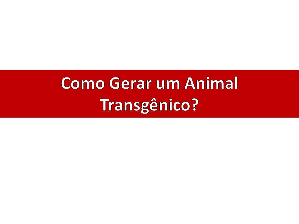 Como Gerar um Animal Transgênico