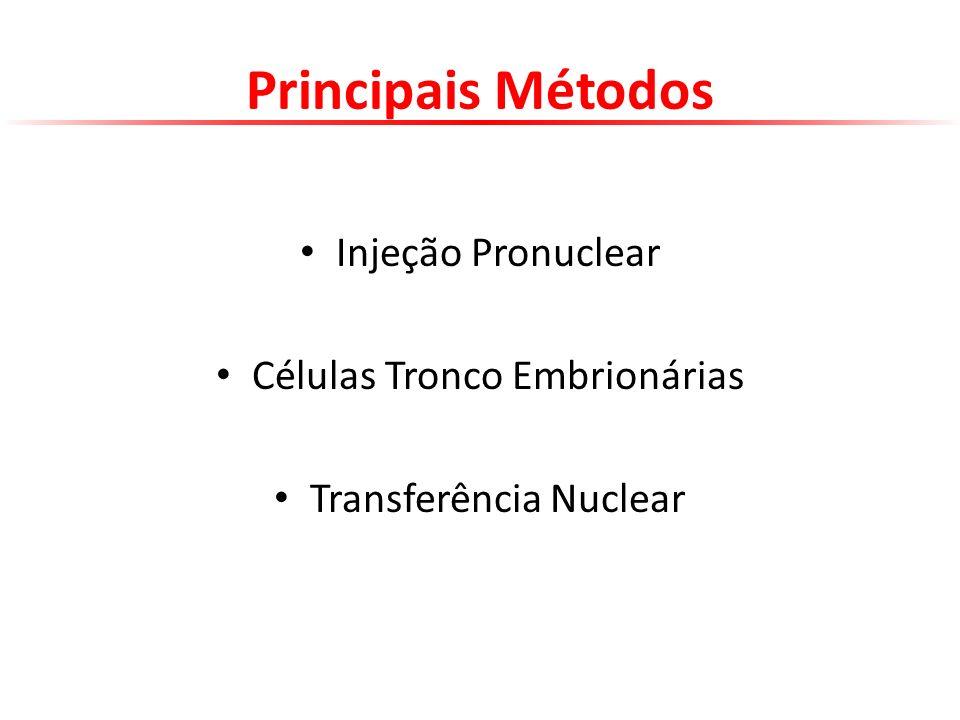 Principais Métodos Injeção Pronuclear Células Tronco Embrionárias