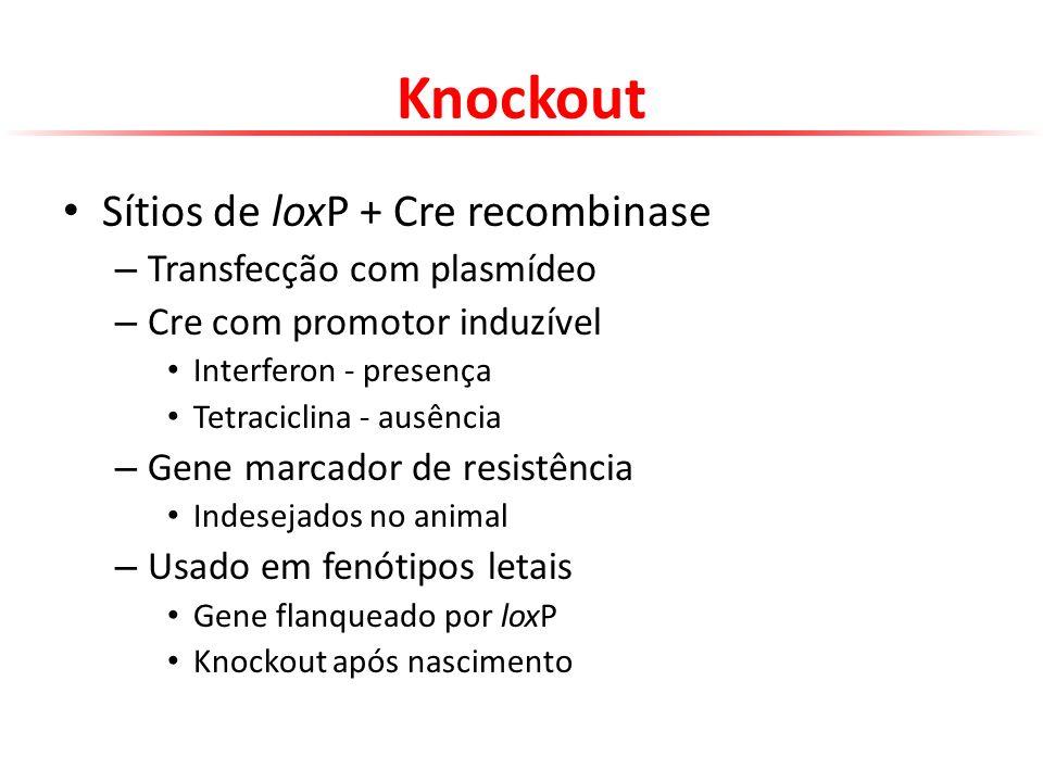 Knockout Sítios de loxP + Cre recombinase Transfecção com plasmídeo