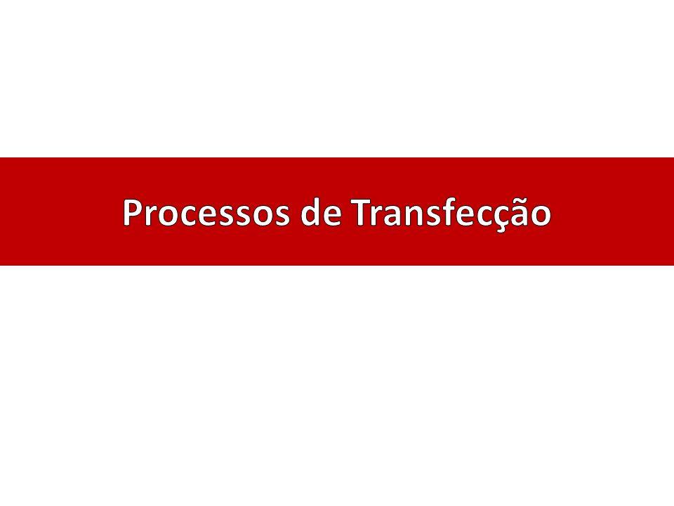 Processos de Transfecção
