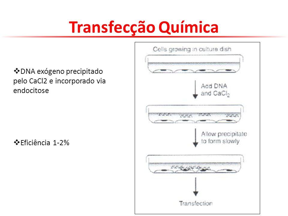 Transfecção Química DNA exógeno precipitado pelo CaCl2 e incorporado via endocitose. Eficiência 1-2%