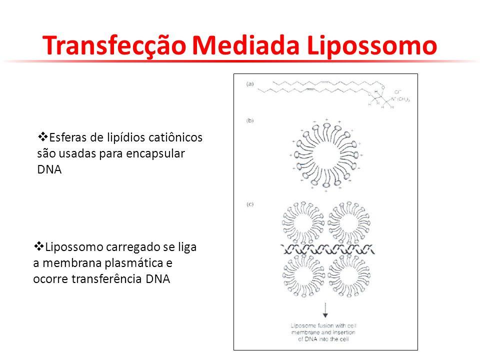 Transfecção Mediada Lipossomo