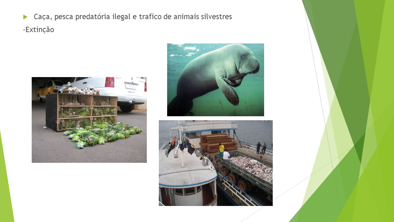 Caça, pesca predatória ilegal e trafico de animais silvestres