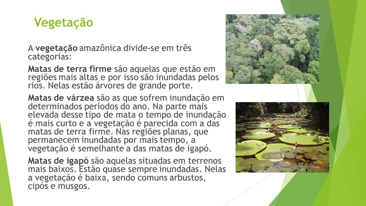 Vegetação A vegetação amazônica divide-se em três categorias: