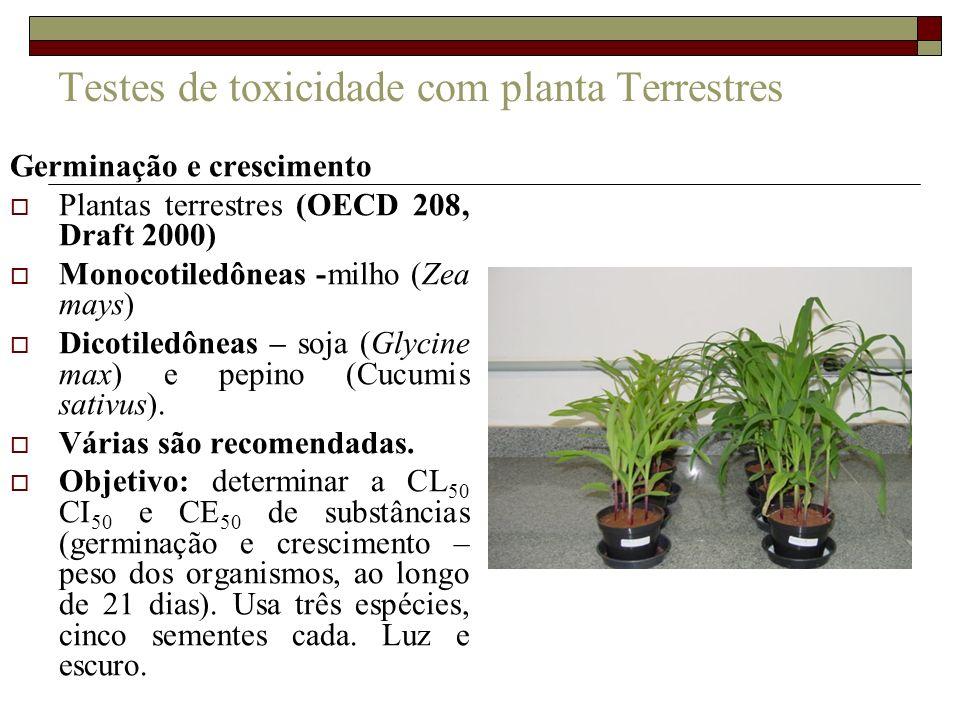 Testes de toxicidade com planta Terrestres