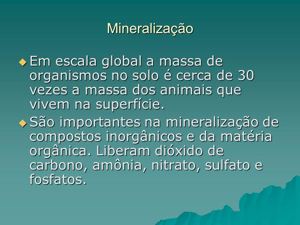 Mineralização Em escala global a massa de organismos no solo é cerca de 30 vezes a massa dos animais que vivem na superfície.