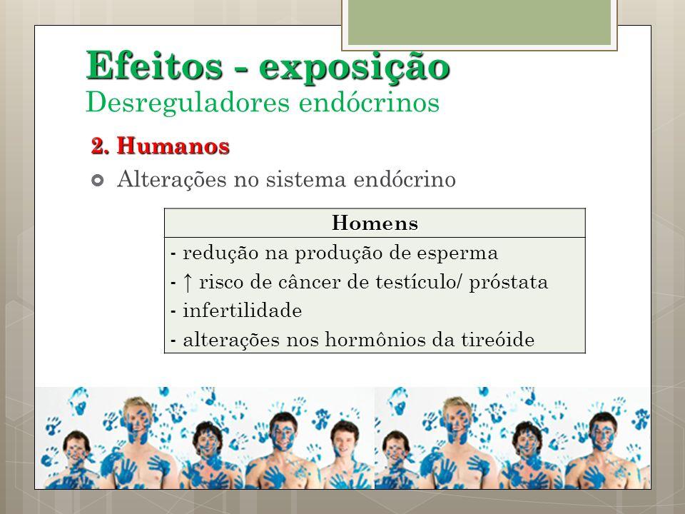 Efeitos - exposição Desreguladores endócrinos 2. Humanos