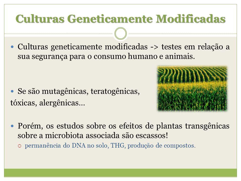 Culturas Geneticamente Modificadas