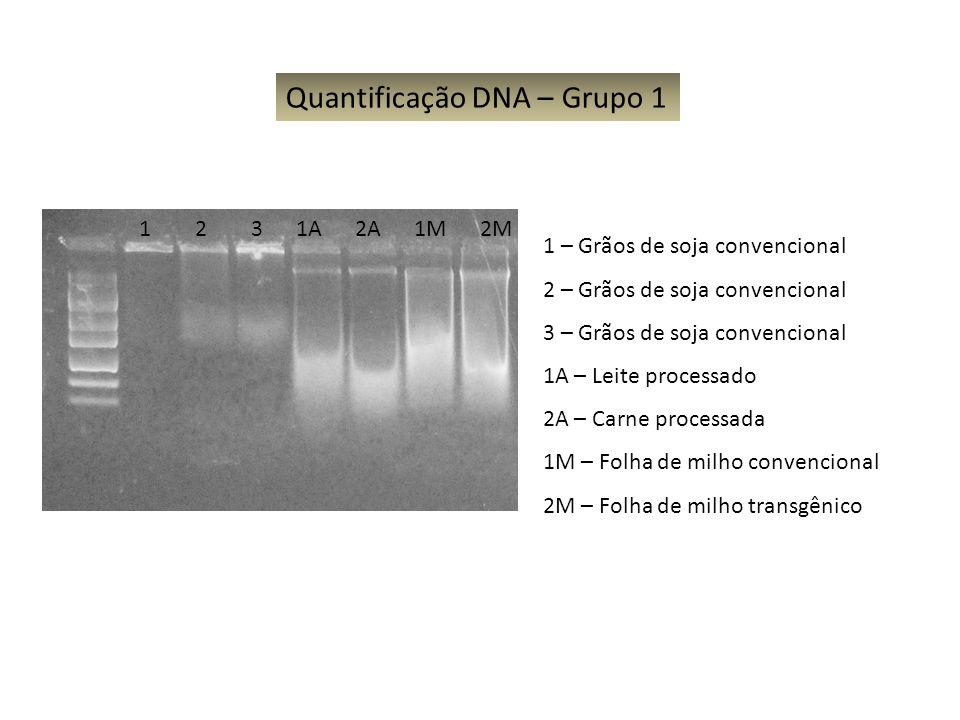 Quantificação DNA – Grupo 1