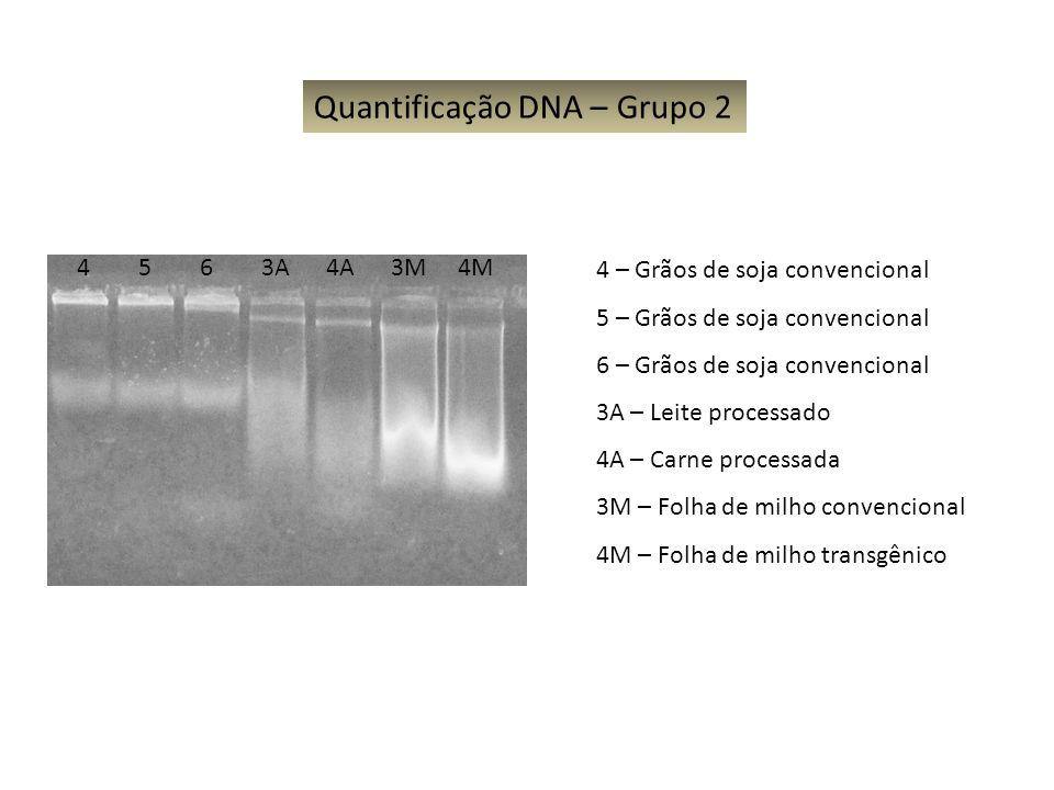 Quantificação DNA – Grupo 2