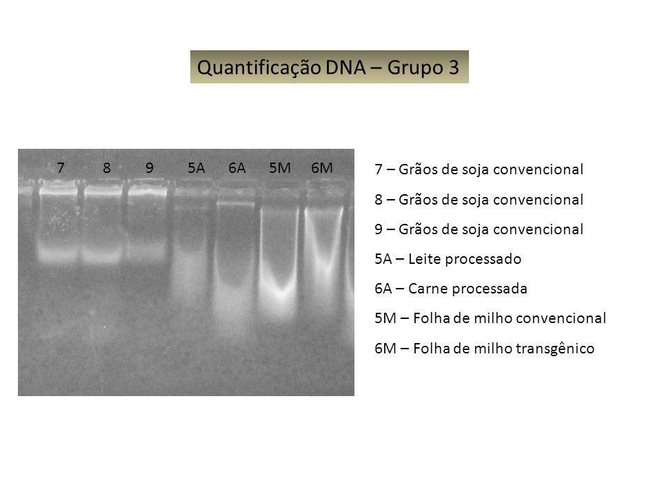 Quantificação DNA – Grupo 3