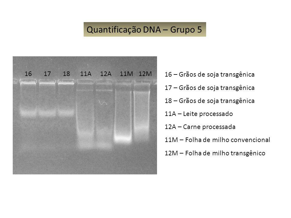 Quantificação DNA – Grupo 5