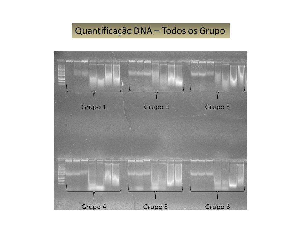 Quantificação DNA – Todos os Grupo