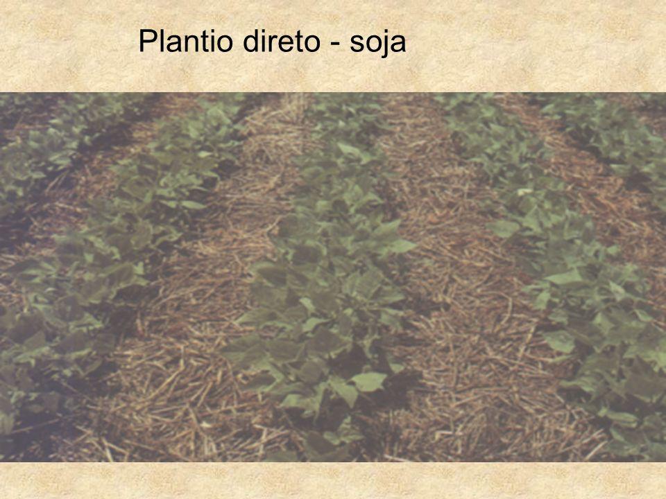 Plantio direto - soja