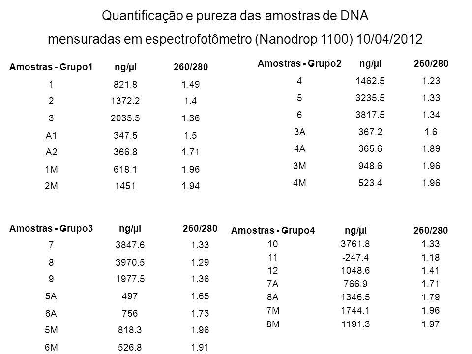 Quantificação e pureza das amostras de DNA